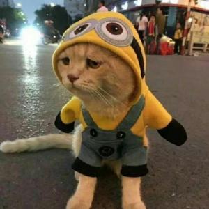 超可爱猫咪情侣头像 你见过这么萌的情头吗?